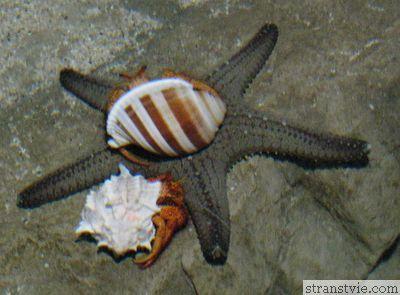Океанариум в Питере