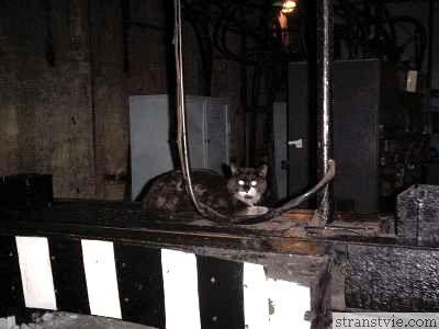 подземный житель кот Башмак