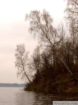 Деревья на берегу Истры