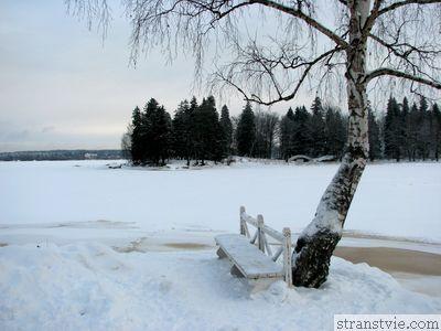 Березка на берегу озера
