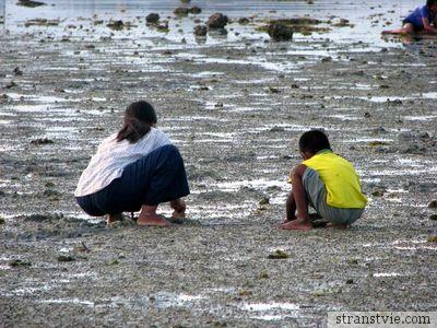 Мидии в отлив в Тайланде