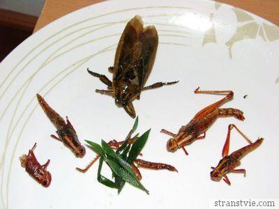 Жареный таракан