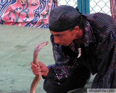Гипноз змеи