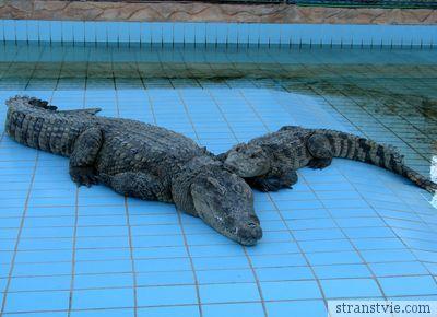 Крокодилы в Египте