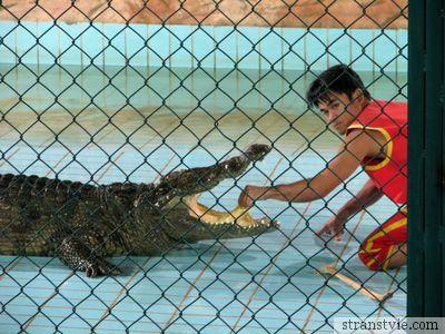 Язык у крокодила