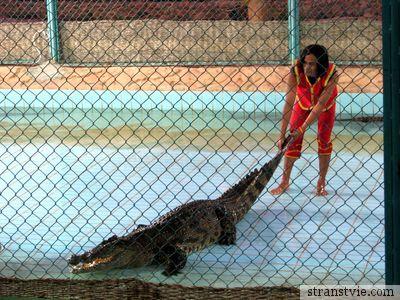 Крокодила за хвост