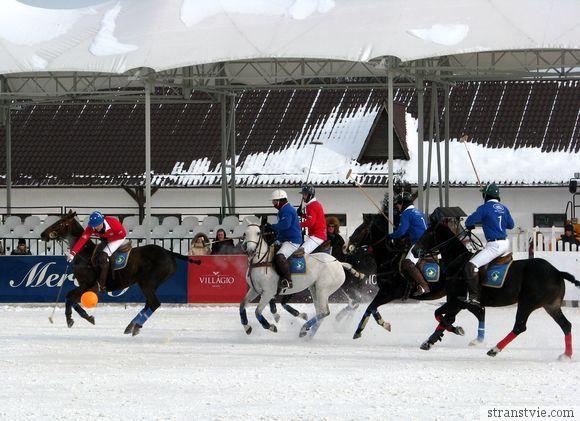 Конное поло на снегу